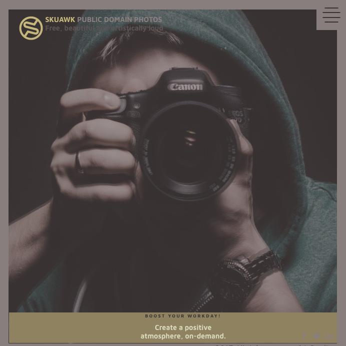 Skuawk – kolejny stock ze świetnymi, darmowymi zdjęciami