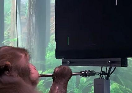 Małpa gra w Ping-Ponga dzięki podłączeniu do Neuralink. Elon Musk zaskakuje!