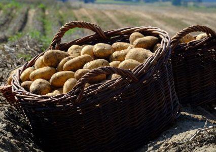 Polskie ziemniaki produkowane z pomocą blockchain wkrótce w Carrefour